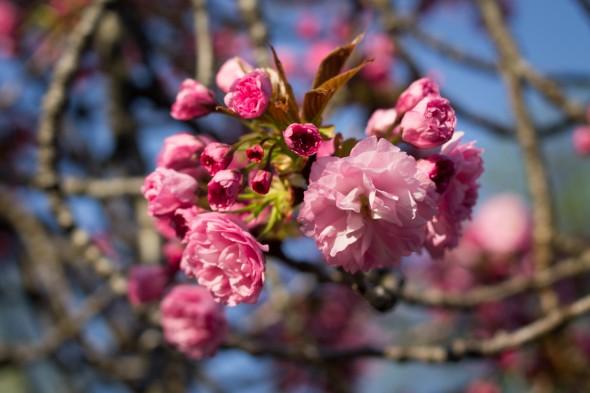 Az idei tavasz képekben